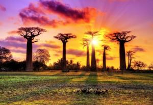 世界のパワースポット マダガスカルの樹